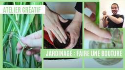 Atelier créatif : Jardinage - Faire une bouture (avec LSF) | Réseau des médiathèques de Massy. Collectivité éditrice